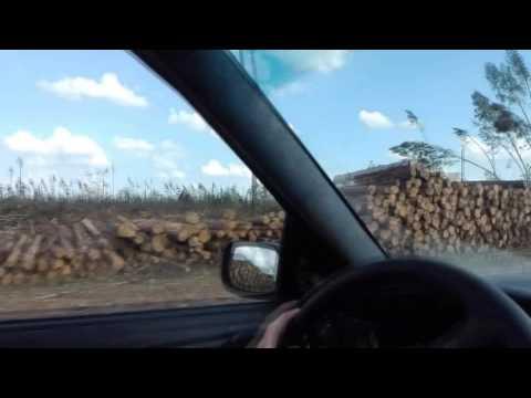 Последствия урагана в беларуси