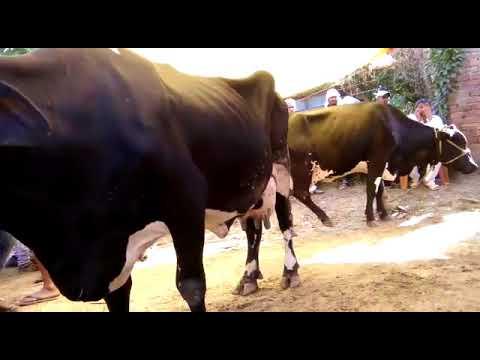 Latest Sonepur Mela 2017 video, Bihar