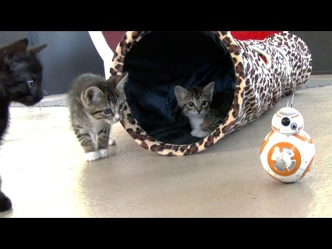 Thumbnail for Cat Video Kittens VS Star Wars BB8 Droids