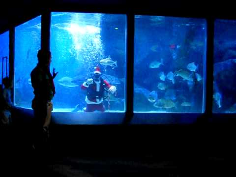 Mark McCarthy - WATCH: Scuba Santa At VA Aquarium