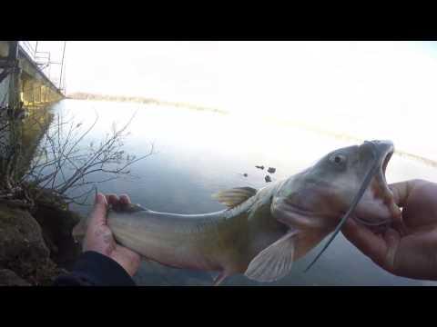 Bush river Catfishing and surprise fish