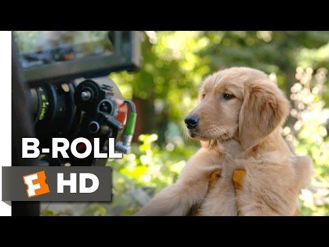 A Dog's Purpose B-ROLL (2017) - Josh Gad Movie