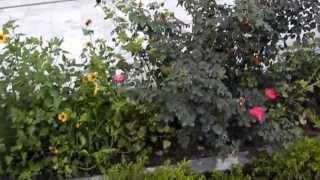 Garden of Eden or as close as it gets!