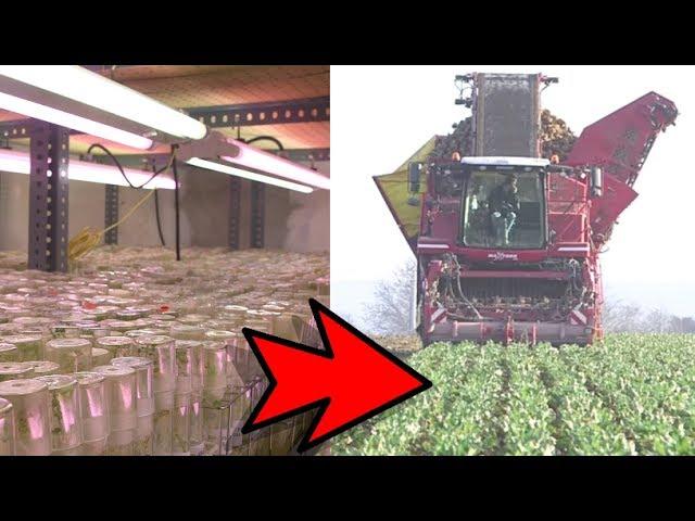 Le sanctuaire de la patate : Là où naissent les variétés super résistantes de demain !