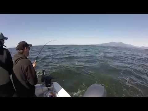 Salmon Fishing At The Hump 2