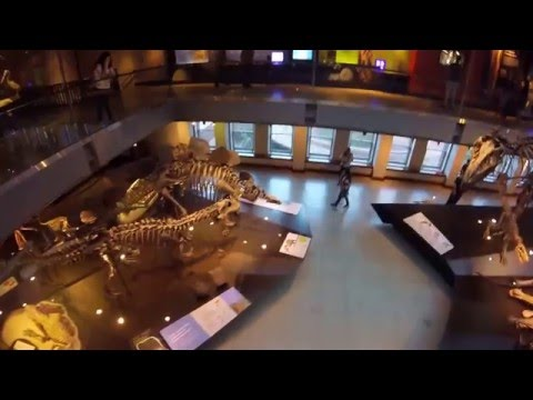 Los Angeles Museum of Natural History, the Dinosaur Display