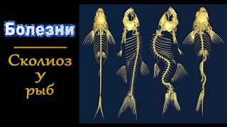 Сколиоз у рыб