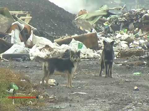 """Главе Хакасии представили """"мусорный"""" проект для Саяногорска"""
