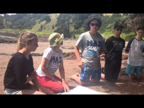 Make A Difference MAD Marine Programme, Motutapu Island January 2015 HD