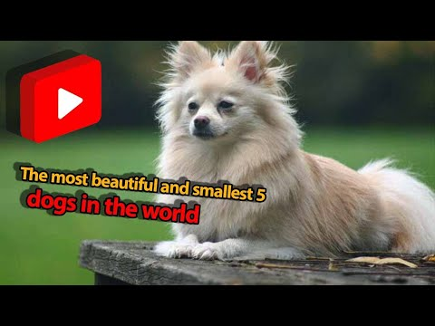 The most beautiful and smallest 5 dogs in the world