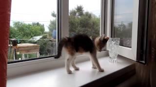 Самое смешное видео про животных (коты и кошки)