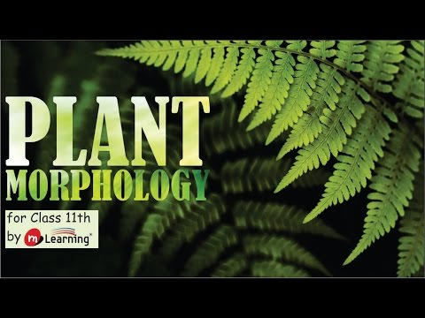MORPHOLOGY OF FLOWERING PLANT: ROOTS IN ANGIOSPERM -  03/11