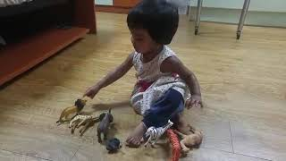 One Year Baby Girl shows Wild Animals