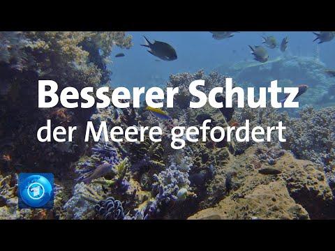 Welttag der Meere: WWF fordert besseren Schutz