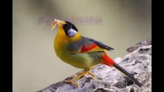 Download lagu Macam nama Burung