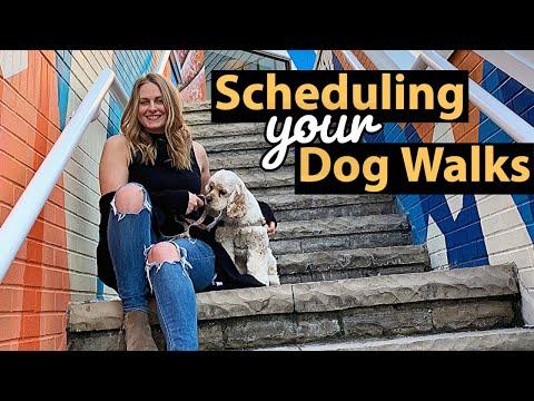 How A Dog Walker Schedules Walks