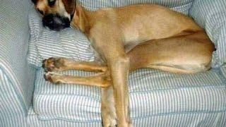 Запрыгивание собаки на мебель. Воспитание без насилия. Метод Пола Оуэнса.