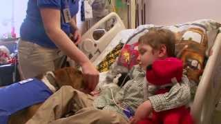 Therapy Dogs Bring Joy to Cincinnati Children