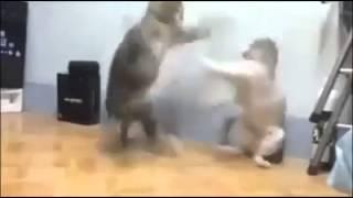 Briga de Gatos Dragon Ball Z
