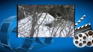 Охота видео. Охота на медведя зимой