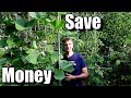 5 Money Saving Tips for Beginning Gardeners (Frugal Gardening)