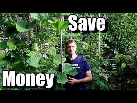 5 Money Saving Tips for Beginning Gardeners (Frugal Gardening)