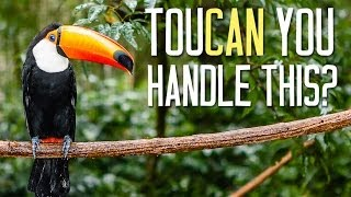 Incredible Rain Forest Facts You Need To Know