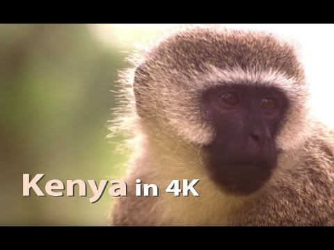 Kenya 4K Ultra HD Highlights, Stock Video Footage