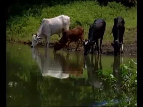 2 साल एक पड़ताल - वाह किसान | Wah Kisan - Success Story - 8 (Spot)