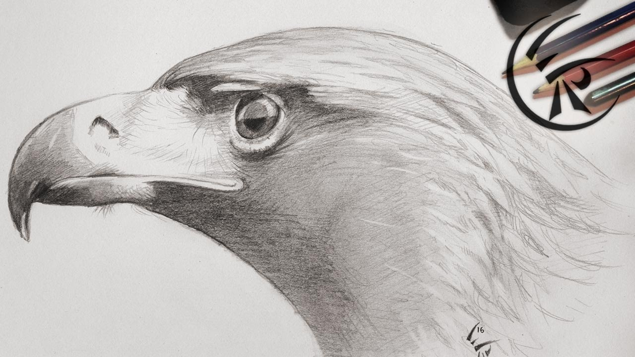 It's just an image of Crush Drawing Of Eagle