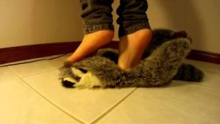 Crushing Stuffed Raccoon