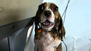 Dog Crying And Singing