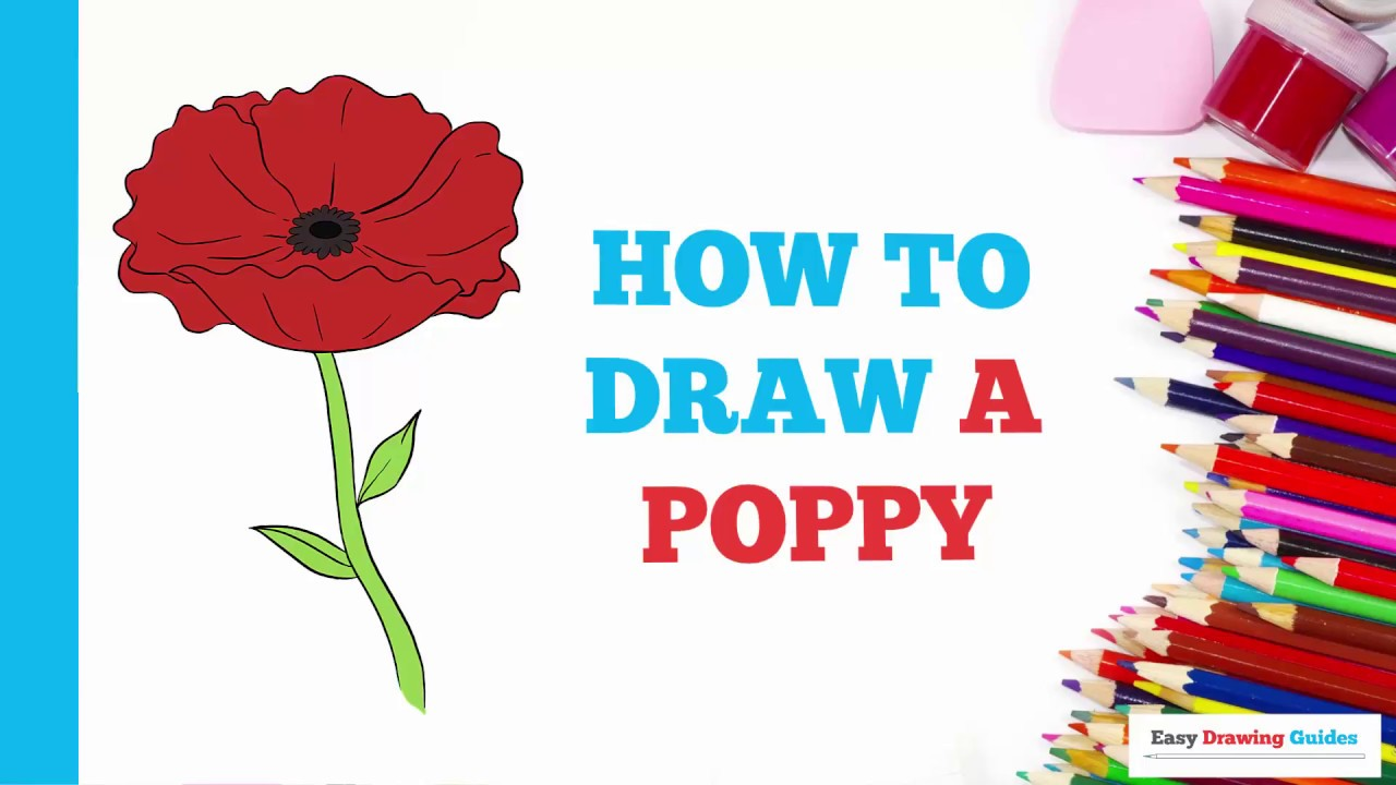 How To Draw A Poppy In A Few Easy Steps Drawing Tutorial For Kids And Beginners Youtube