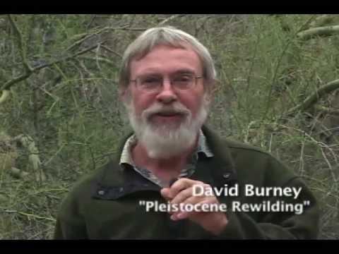 Paul S. Martin, Pleistocene Ecologist: Colleagues Honor His Legacy, 2011