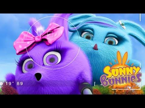 Cartoons for Children | SUNNY SELFIES | SUNNY BUNNIES | Funny Cartoons For Children
