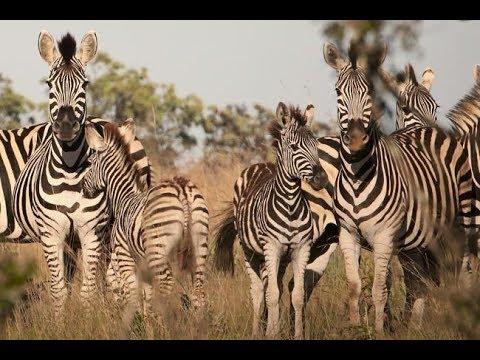 The Warnke Family's African Safari