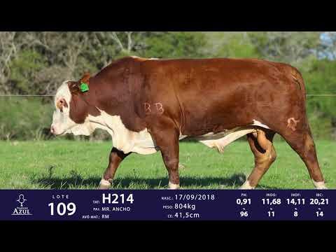 LOTE 109 - TAT H214, TAT H026