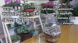 영양이 듬뿍든 바나나,계란껍질과 식초로 새로운 다육이 영양제 만들기HOW to nutritional supplements for succulents.