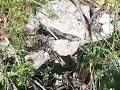 Yilanli Yer Tespiti Kuzey Alan Tarama 05465618612