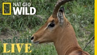 Safari Live - Day 136 | Nat Geo Wild
