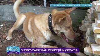 Sunny – caine rau, peripetii in Croatia