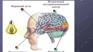 Презентация Глаз как орган зрения и оптическая система