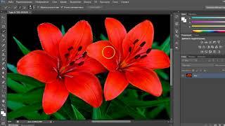 Как вырезать объект в Фотошопе с помощью Быстрого выделения