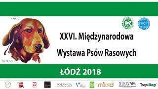 XXVI. Międzynarodowa Wystawa Psów Rasowych - Łódź 2018 (finały - sobota)
