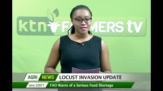 FAO: Locust invasion at level three emergency and the worst in the past 7 years and more - Agri News