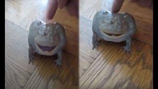 Thấy ếch lạ nhảy vào nhà, tò mò chạm vào nó, không ngờ tiếng 'hét lên' làm cả nhà sợ hãi