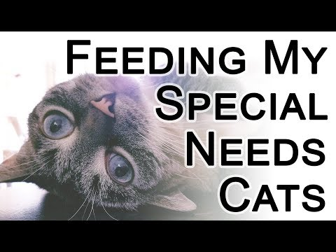 Adding Meds And Fish Oil To Cat Food