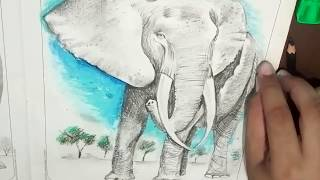 Elephant sketch using oil pastel and charcoal pencil colour s