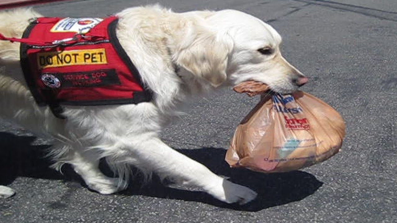 Service Dog Training For Diabetes