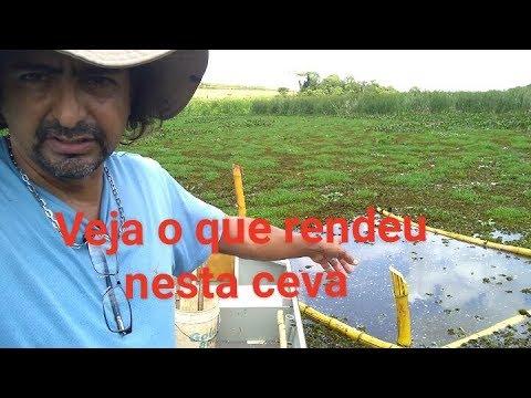 Ceva no Pantanalzinho